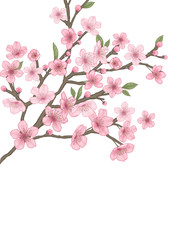 This picture is an illustration of Cherry Blossom. This is an illustration that depicts delicate portrayals and modern colors.