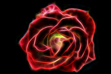 Abstract glow wire red rose on a black background.