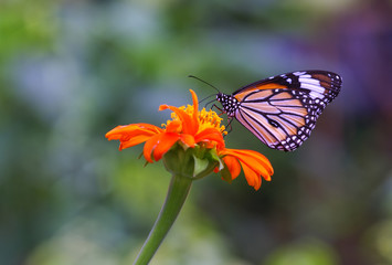 butterfly, flower, insect, nature, monarch, macro, orange, garden, summer, green, wing, animal, yellow, wings, color, spring, colorful, beauty, wildlife, black, fly, closeup, fauna