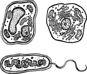 Plant, animal and bacteria cells with organelles