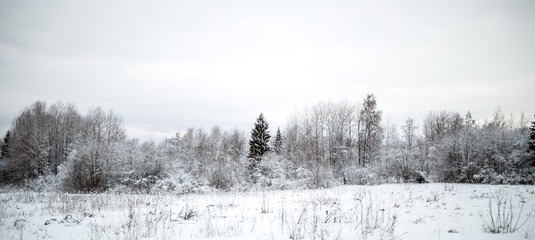 Photo of snowy field with shrubs and fir trees