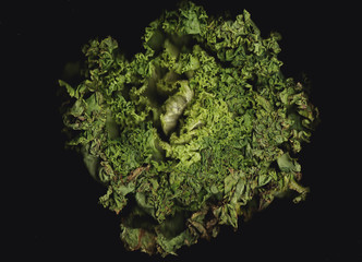 lettuce background isolate
