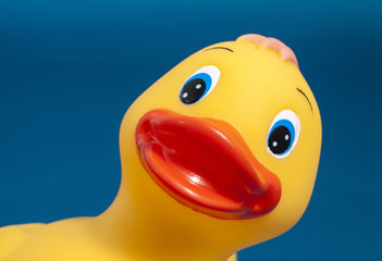Close up of a yellow plastic duck isolated on a blue background