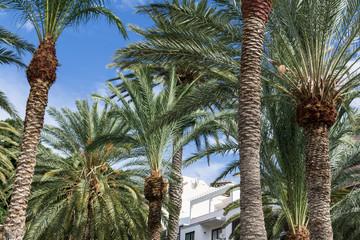 Palme mit blauem Himmel