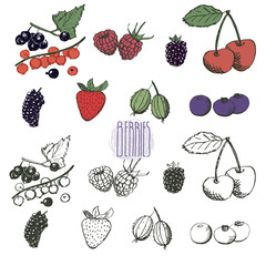 Berries collection. Hand drawn set of berries in vector. Vintage berries sketch. Currant, raspberry, blueberry, cherry, mulberry, blackberry, gooseberry, strawberry. Elements for menu design.