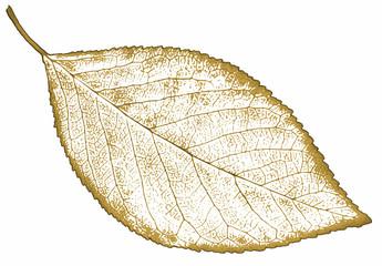 nature leaf Isolated