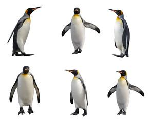 Photo sur Aluminium Pingouin King penguin set isolated on white