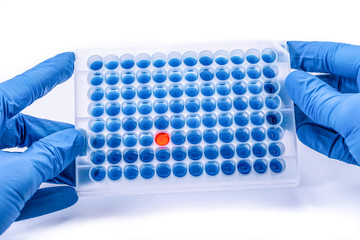 Laboratory test plate. hands with 96 well microplate. medical or microbiological test of blood or dna. test of cancer or virus