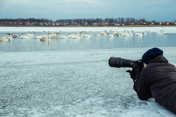 man take picture of swans on winter lake