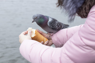 Young woman feeds a pigeon with hands on the riverbank in the city.