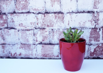 Red tipped succulent in a red vase against brick background. Horizontal design.
