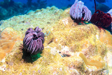 Flower on a coral reef in the Philippines.