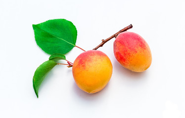 Ripe bunch of apricots on branch with leaves, isolated on white.