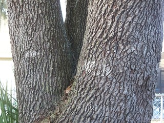 The 'eyes' are perhaps a look into the soul of the oak tree