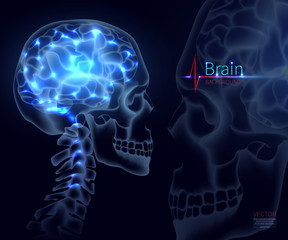 Brain, vector illustration for medicine. A skull shot, neural networks of the brain, Brain activity and performance,  A creative illustration in a new style of 2018