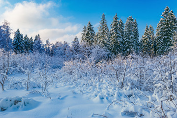 View of the winter forest.