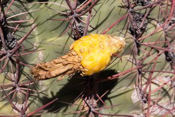 Desert Cactus with Flower