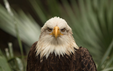 eagle eyes are staring at you