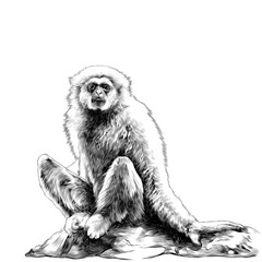 Gibbon sitting on a stone sketch vector graphic monochrome drawing