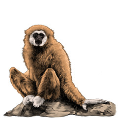 Gibbon sitting on a stone sketch vector graphics colored drawing
