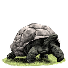 big land turtle walking on grass sketch vector graphics colored drawing