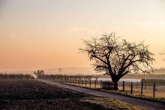 Wintermorgen in den Feldern Rheinhessens