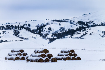 Three Stacks of hey bales in winter