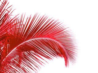 palme rouge de cocotier, fond blanc Wall mural