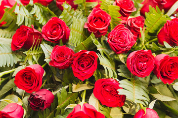 Lots of Red Rose Flowers with Green Leaves