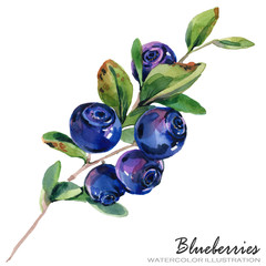 forest berries watercolor illustration