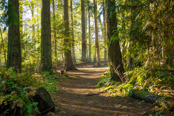 Sunrays filtering thru the forest foliage in a Vancouver Island provincial park