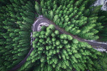 Foto auf Acrylglas Olivgrun Empty road in a forest from a drone