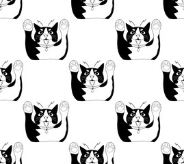 Cute Black and White Cat Attack on White Background