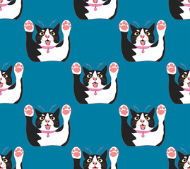 Cute Black and White Cat Attack on Indigo Blue Background