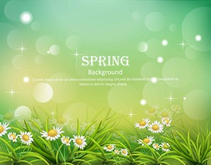 Hello spring background with chamomile flowers Vector