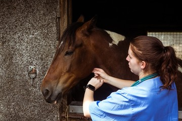 Vet examining horse in stable