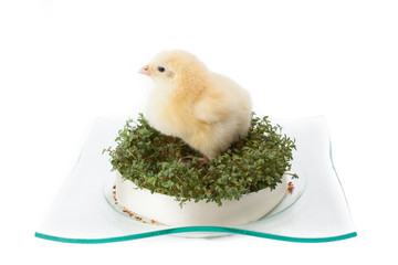 small fluffy yellow Easter chicken on the edges