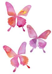 アゲハ蝶の水彩イラスト