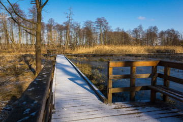 Footbridge among swamps in park in Konstancin Jeziorna, Mazowieckie, Poland