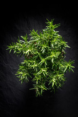 Fresh rosemary, aromatic herb, top view, black background