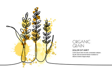 Continuous line drawing. Vector linear illustration of wheat, rice ears and grains on watercolor splashes background. Design elements for agriculture, organic cereal products, bakery.