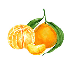 Ripe tangerine or clementine watercolor