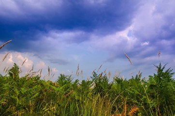 Summer evening landscape minimalism photography / Beautiful green ferns in foreground with beautiful blue cloudy sky on background