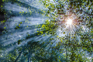Wonderful sun rays penetrating among the branches and leaves of the broadleaf trees in decidous forest in a hot summer day