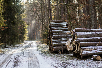 A pile of wood arranged by a forest road. The stacked wood is waiting for deportation from the forest.