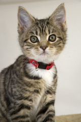 Cute kitten staring wide eyed at the camera