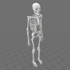 Stylized human skeleton