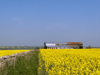 Rusty farm barns standing in a vibrant spring landscape of yellow oil seed rape in the Cotswolds near Chalford, UK