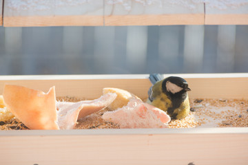 The titmouse eats in the trough