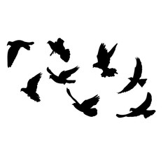 isolated, silhouette of flying birds